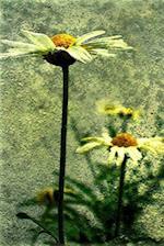 Marguerite Flower Illustration Journal