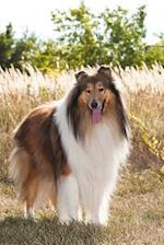 An Ever So Sweet Rough Collie Dog Journal