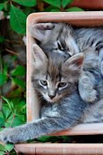 Two Cozy Cuddling Gray Kittens Journal