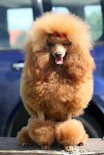 Fluffy Diva! Toy Poodle Dog with a Red Bow Journal