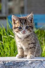 Curious Little Tabby Kitten Journal