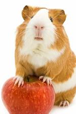 Cute Red and White Guinea Pig with a Red Apple Journal