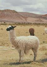 Llamas Are Cute