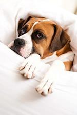 Sleepy Boxer Dog Under the Covers in Bed Journal