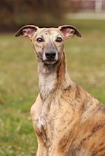 Cute Brindle Whippet Dog Portrait Journal