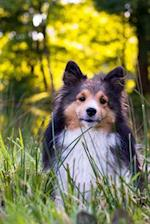 Darling Sheltie in the Grass Dog Journal
