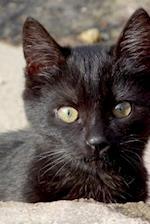 Sweet Little Black Kitten Peeking Around the Wall Journal