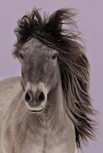 A Gray Yakut Horse Portrait Journal