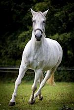 Beautiful Galloping White Horse Journal