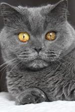 Blue British Shorthair Cat Strikes a Pose Journal