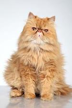 Ginger Persian Cat Journal