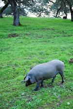 Iberian Pig in a Meadow in Spain Journal