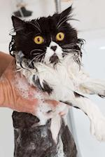 Bath Time Sucks for the Persian Cat Journal