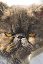 Persian Cat Portrait Journal