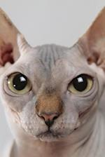 Say Hello to the Sphinx Cat Journal