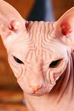 Sphinx Cat Looks Like an Alien Journal