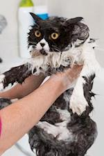 Persian Cat Faces Trauma in Bath Journal
