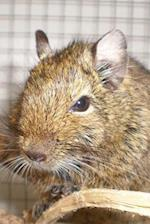 A Common Degu Brush-Tailed Rat (Octodon Degus) Journal