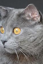 Captivating Chartreux Cat Journal