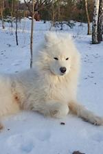 Gorgeous White Samoyed Dog Playing in the Snow Journal