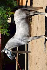 Gorgeous Gray Andalusian Spanish Horse Journal