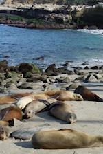 Happy Sea Lions Basking in the Sun on a Sand Bar Journal