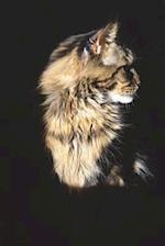 Profile Portrait of a Beautiful Maine Coon Cat Journal