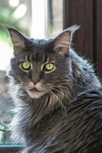 Say Hello to the Maine Coon Cat Journal