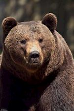 Wild Carpathian Brown Bear (Ursus Arctos) Animal Journal