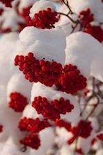 Red Rowan Berries in the Snow Finland Journal