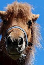Mini Shetland Pony Having a Bad Hair Day Journal