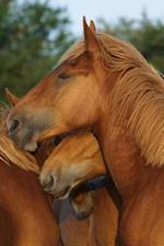 Suffolk Punch Yearlings Horse Journal