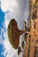 Dragon Trees at Homhil Plateau Socotra Yemen Journal