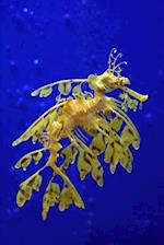 Sea Dragon in a Singapore Aquarium Journal
