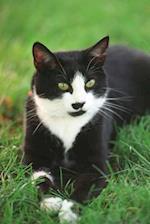 Beautiful Black and White Tuxedo Cat Journal