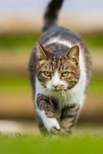 A Gorgeous Intense Tabby Cat on the Prowl Journal