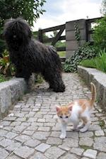 A Black Puli Dog and a Little Orange and White Kitten Journal