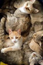 Cuddling Kitty Cats Journal