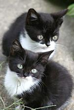 Two Darling Black and White Kittens Journal