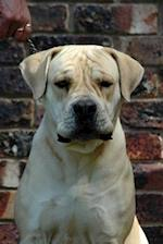 A Boerboel South African Mastiff Dog Journal