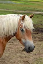 Beautiful Purebred Haflinger Aka Avelignese Horse Portrait Journal
