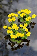 Pretty Yellow Kingcup Marsh-Marigold Caltha Palustris Flower Journal