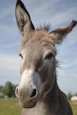 A Curious Donkey Checking You Out Journal