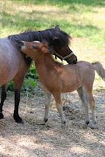 Miniature Mother Horse and Baby Foal in a Pasture Journal