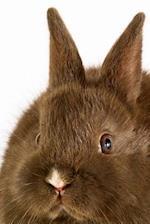 Sweet Little Brown Bunny Rabbit Journal