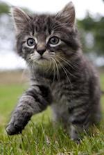 Sweetest Little Tabby Kitten on an Adventure Journal