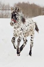 An Adorable Appaloosa Foal Horse Journal