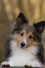 Sweet Little Sheltie Dog Portrait Journal