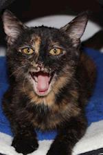 Ever So Sweet Tortoiseshell Kitten on a Striped Wool Blanket Cat Journal