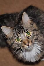 Oh So Cute Tabby Cat Asking for a Treat Pet Journal